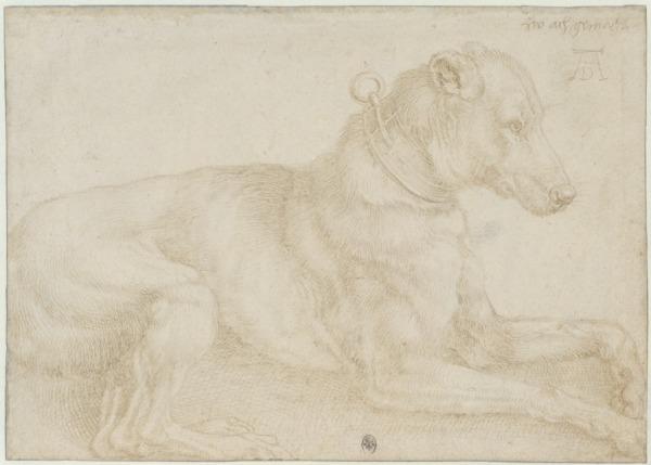 Dog Resting by Albrecht Dürer